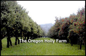 The Oregon Holly Farm
