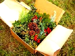 Fresh Greens Decorator Box 10 lbs
