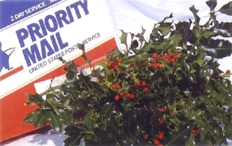 Holly Sprig Box 2 lbs.