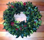 English Green Holly with Red berries