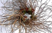 Curly Willow Wreath