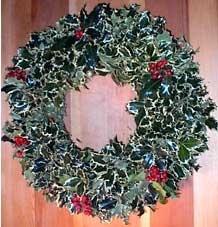 "16"" White Holly Wreath"